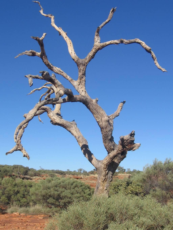 döda träd med kopparspik